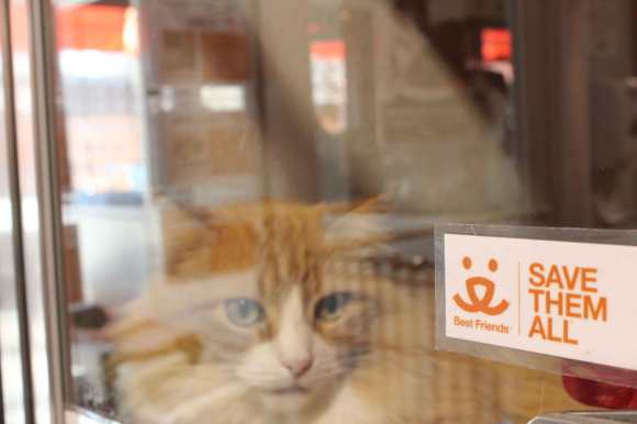 An adoptable cat relaxes in its cage at the Sugar House location.