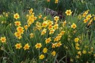 RBG Blooming Flowers 1