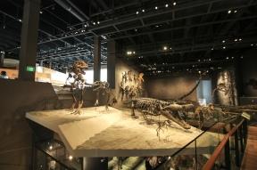 NHMU Museum fossils