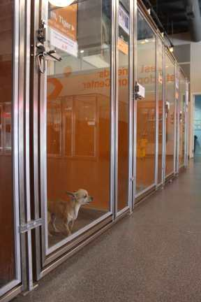 A dog barking at volunteers and visitors at the Sugar House location.